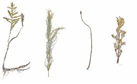 Maciej Salamon, Shipyard Herbarium, 2015